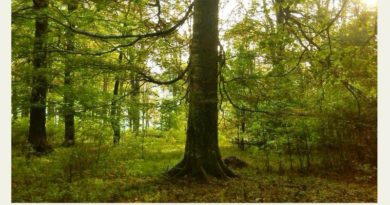 обучение Trees that are rooted